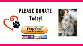 Donate to Savannah Cat Care Fund